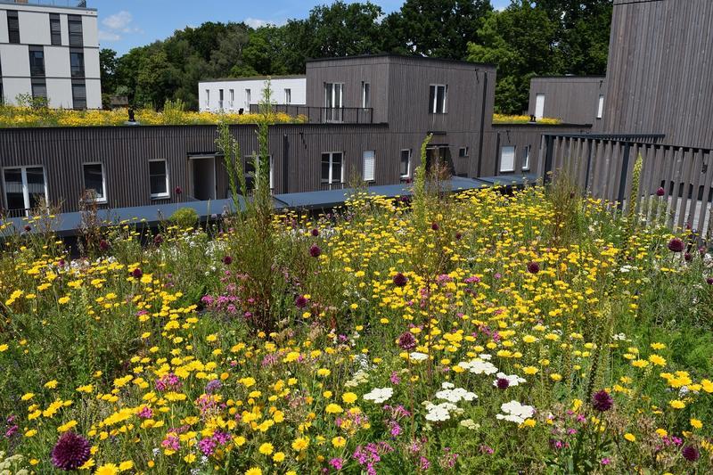 Biodiversitätsgründach (Foto: Bundesverband GebäudeGrün e.V.)